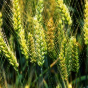 Препараты для растениеводства