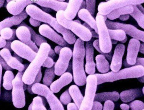 Пробиотики: актуальность и механизмы