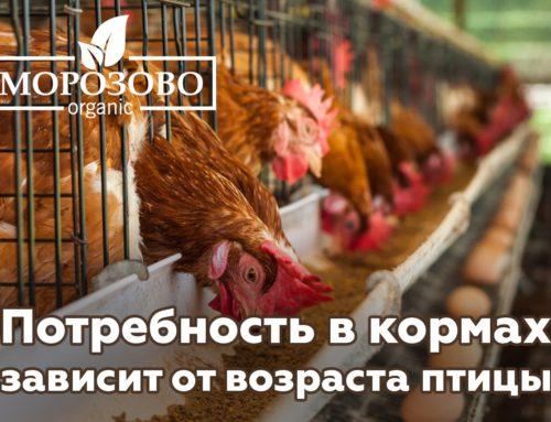 Потребность в кормах зависит от возраста птицы