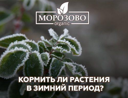 Кормить ли растения в зимний период