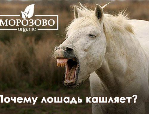 Почему лошадь кашляет?